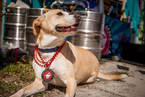 Pups & Pints at Concrete Beach